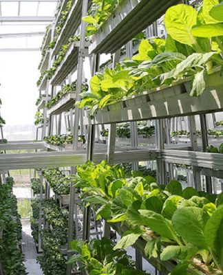 dikey tarım